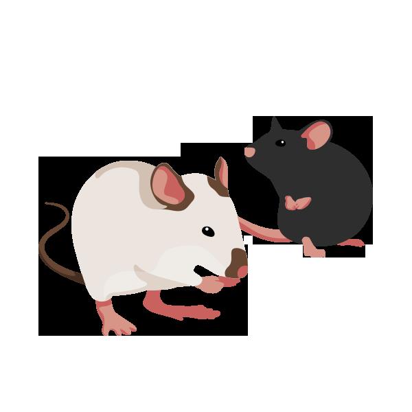 roedores mascotropa